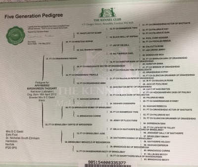 Birdsgreen Taggart of Brindlebay pedigree