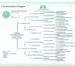 Birdsgreen Slipstream Pedigree